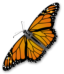 jimmiet_Monarch_Butterfly