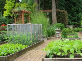 Wellness Garden Weekly